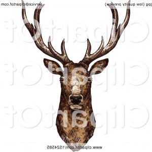 300x300 Best Hd Deer Buck Drawings Vector Pictures Studiogrfx
