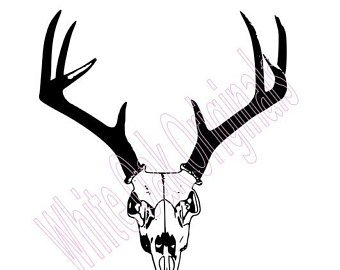 340x270 Huge Collection Of 'buck Skull Drawing' Download More Than