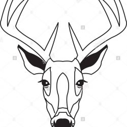 250x250 Whitetail Antler Caribou Drawing Shed Buck Flowers Deer Iydunetwork