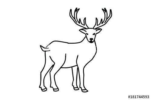 500x330 Deer Drawings For Kids