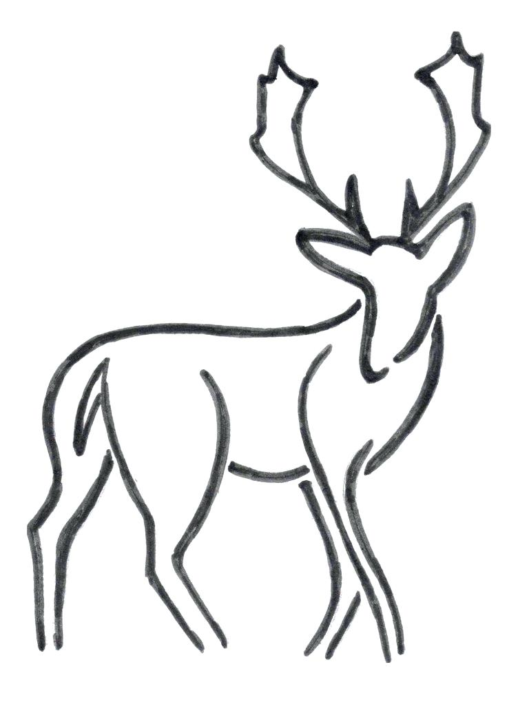 768x1019 How To Draw A Easy Deer