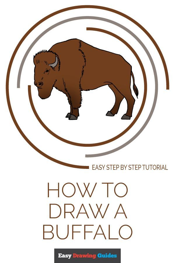 600x900 How To Draw A Buffalo