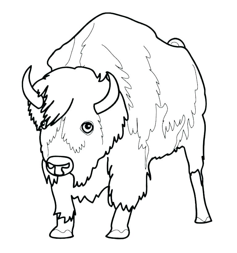 Buffalo Outline Drawing | Free download on ClipArtMag