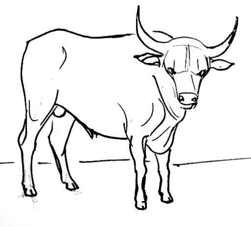 511x463 Bull Drawing Squiggles In Drawings, Sketching