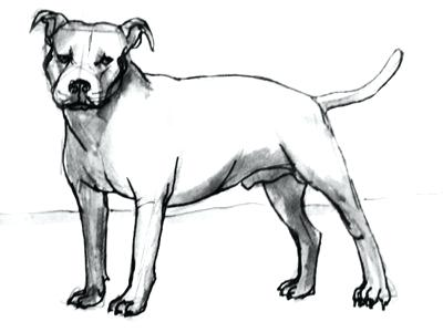 400x300 drawings of pit bulls pit bull and roses