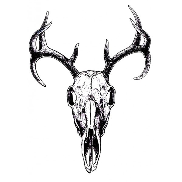 600x600 Horns Drawings Bull Easy