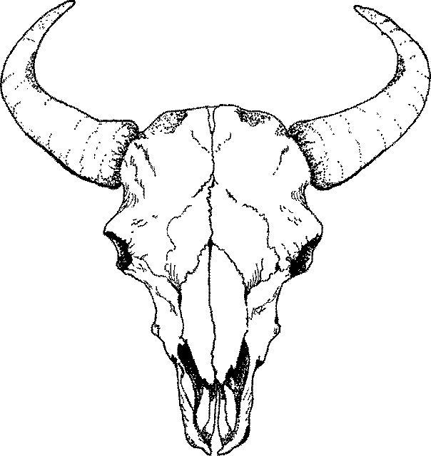604x640 Buffalo Skull Drawings Skulls