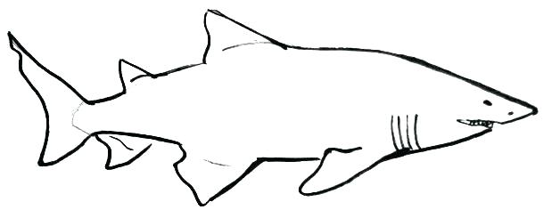619x245 easy shark drawings shark bull shark drawing easy step