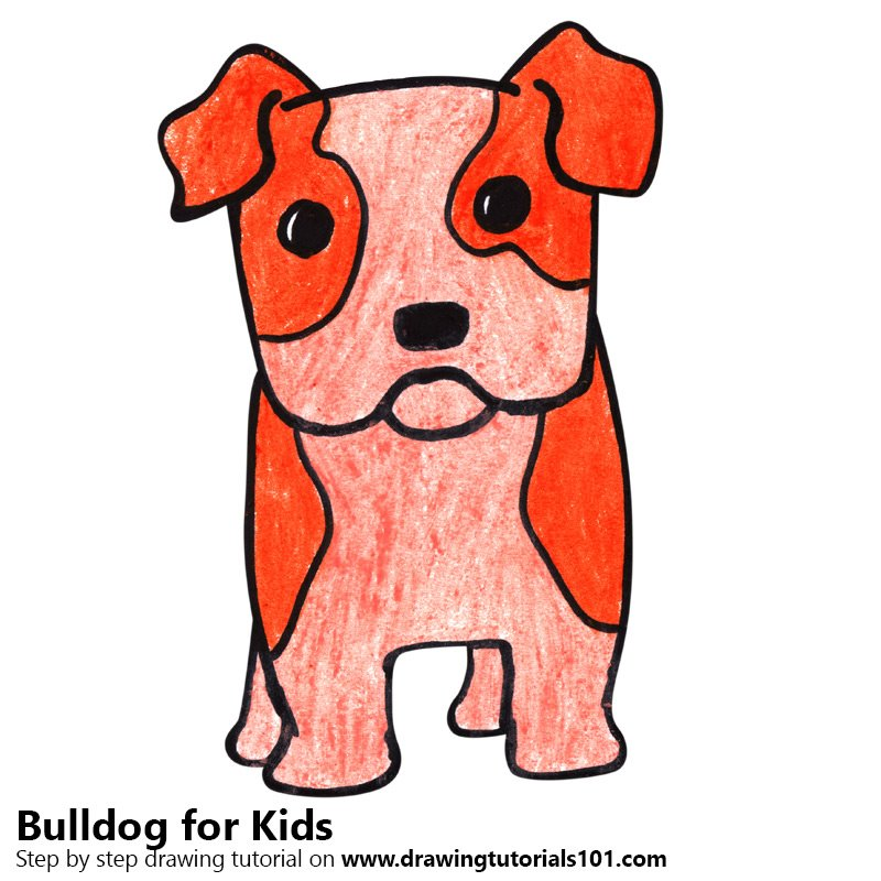 800x800 Learn How To Draw A Bulldog For Kids