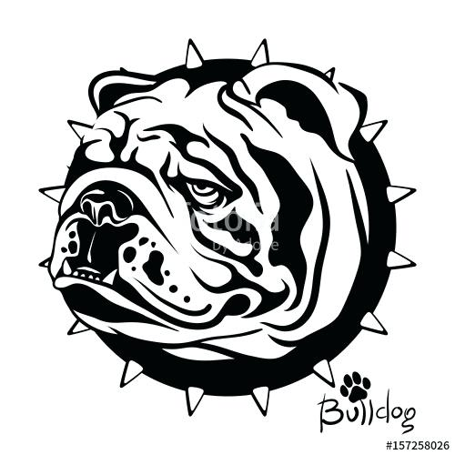 500x500 drawing of a bulldog how to draw an bulldog step french bulldog