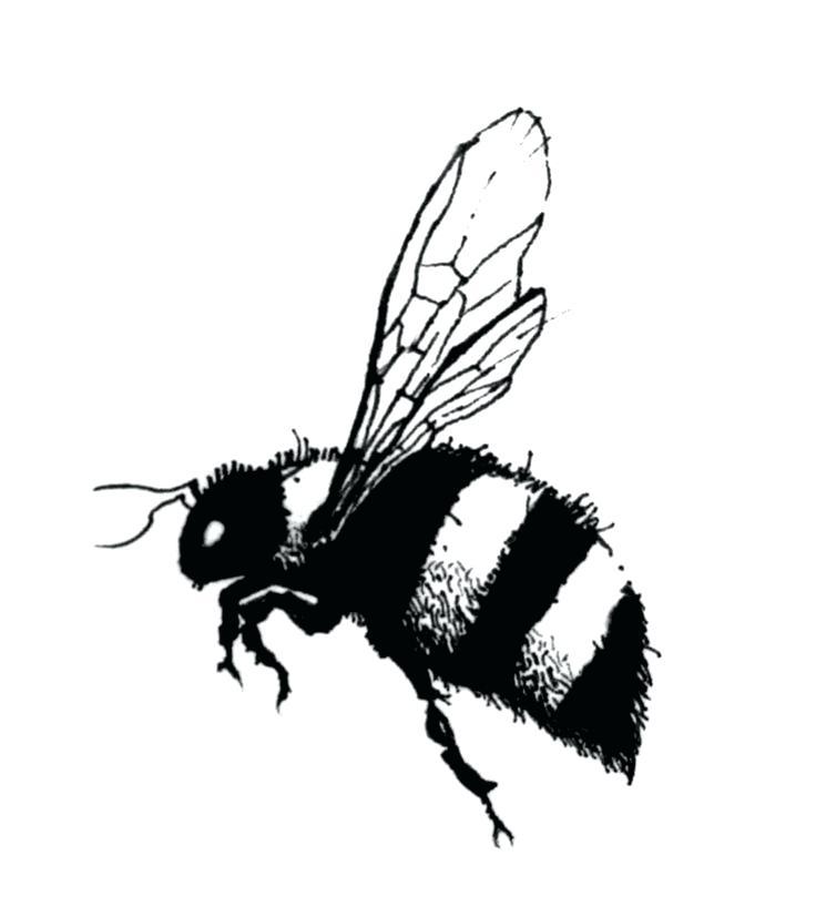 736x818 bee drawings bee free bee clip art drawings wiz bumble bee