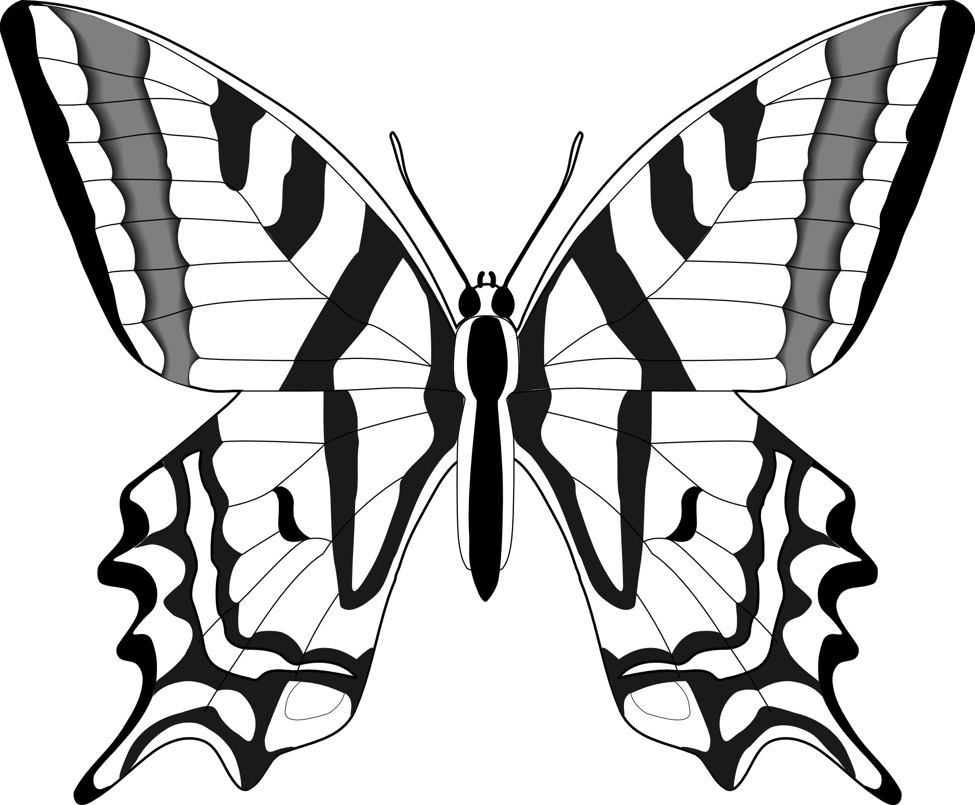 Butterfly black and white drawing free download best