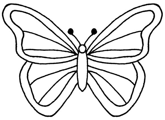 Butterfly Cartoon Drawing