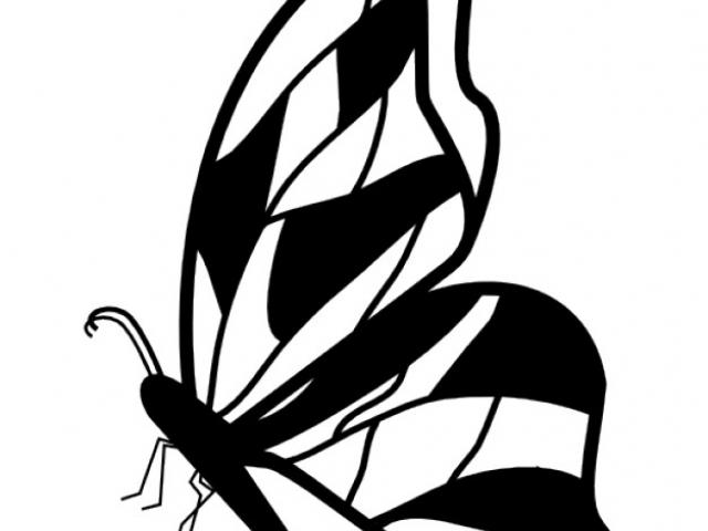 640x480 Butterfly Design Clipart Drawing