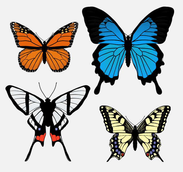 640x600 How To Draw Animals Butterflies, Their Anatomy And Wing Patterns
