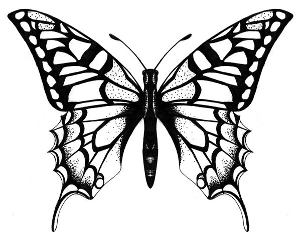 600x474 Huge Collection Of 'butterfly Drawing Designs' Download More Than