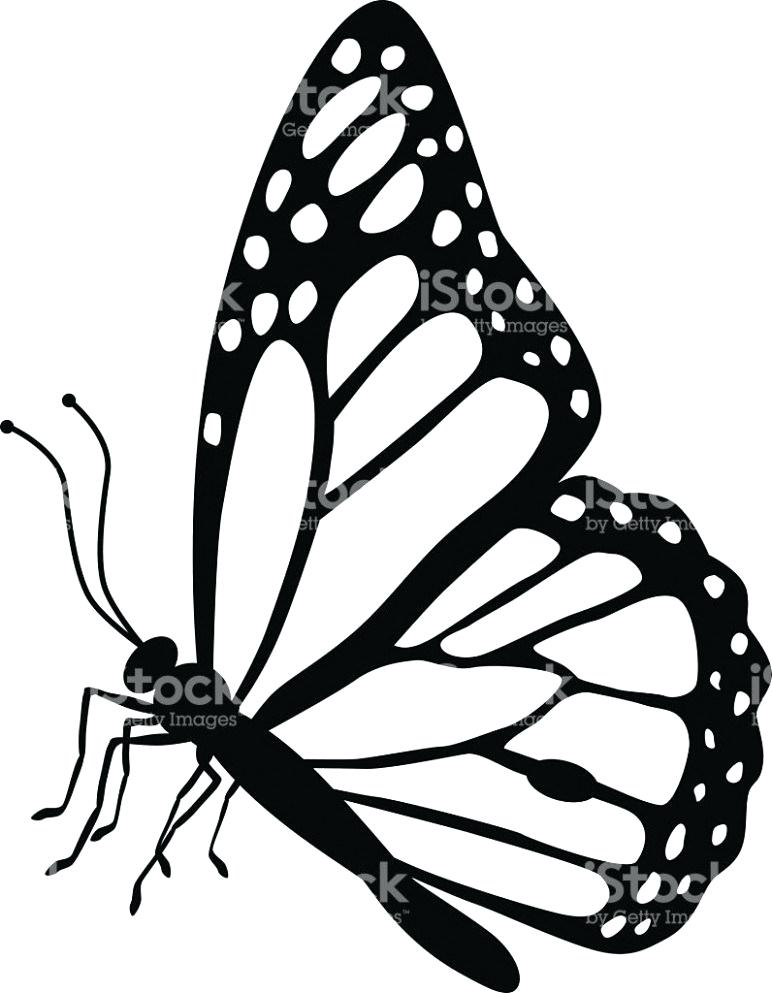 772x993 Butterfly Images Drawings