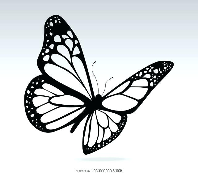 641x570 Butterfly To Draw Easy Drawing Butterfly Tattoo