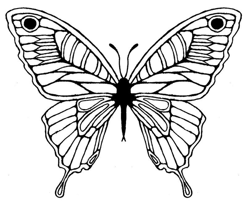 800x660 Butterfly Wing Drawing