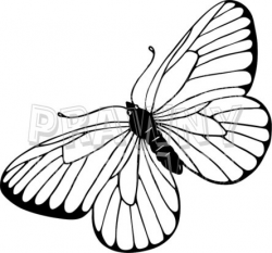250x233 Butterfly Clip Art Line Drawing, Picture