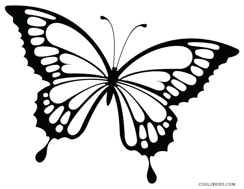 800x620 Coloring Pages Draw Butterflies Butterfly Drawing Home Improvement