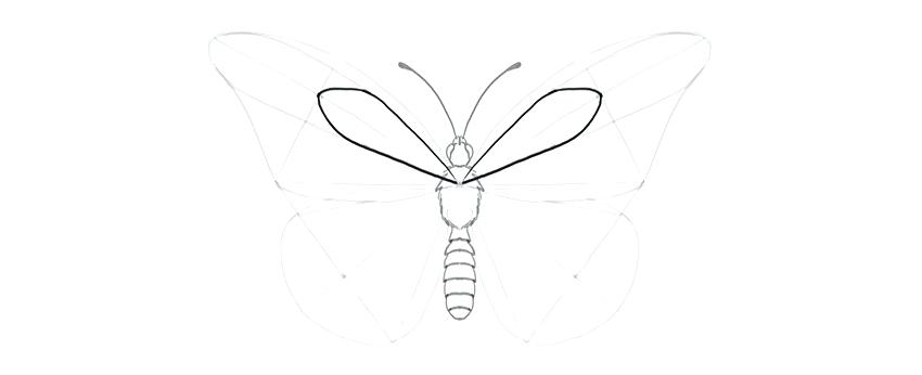 850x346 How To Draw Butterflies Step