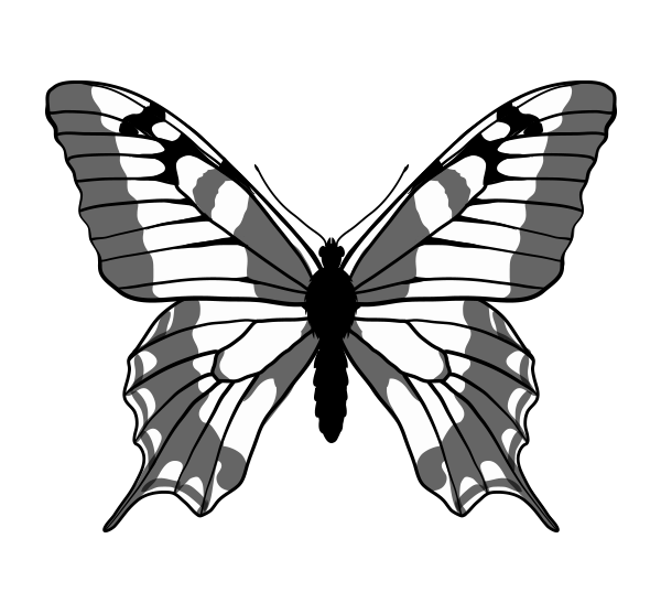 600x547 How To Draw Animals Butterflies, Their Anatomy And Wing Patterns