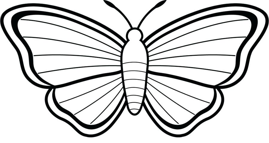 900x480 Butterfly Images Drawings