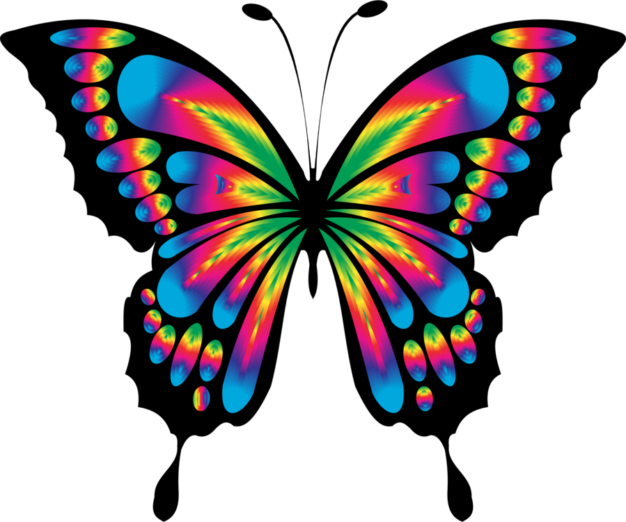 899x750 Butterfly Clip Art For Liturgical Year Drawing Cc0