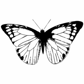 320x320 Hd Butterfly Pictures Black And White