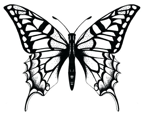 600x474 Butterfly Drawing
