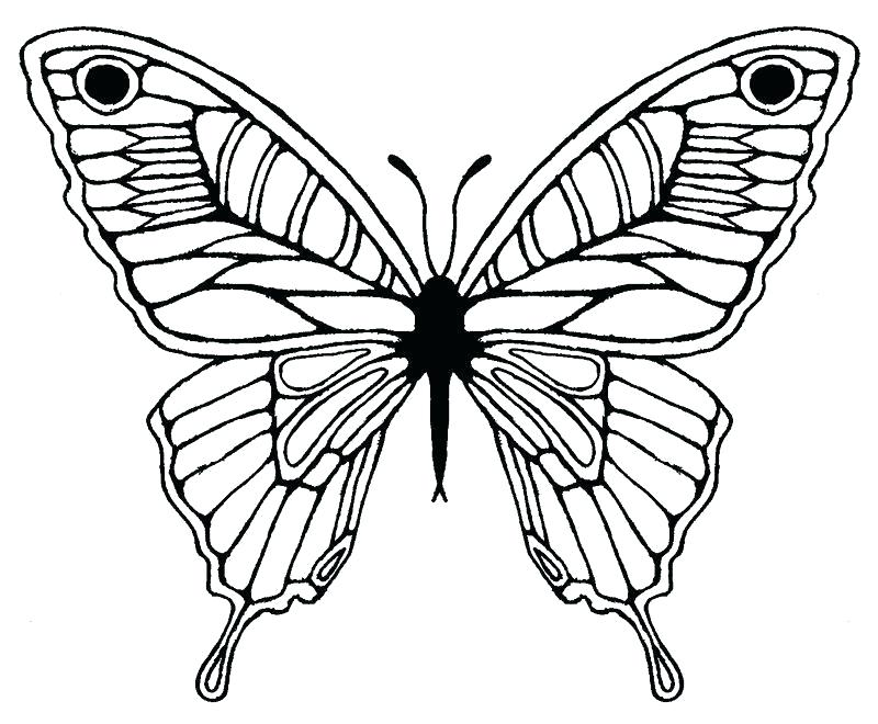800x660 Butterfly Wing Template Drawing Pattern Evolution Patterns Easy
