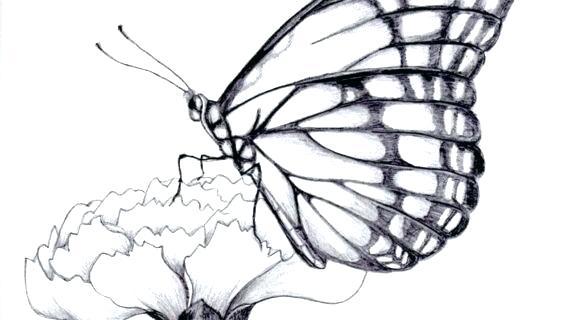 570x320 Drawings Of Butterflies Drawings Of Flowers And Butterflies My