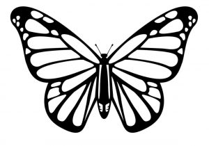 300x210 Easy Butterfly Drawing Sizable Easy Butterflies To Draw Butterfly