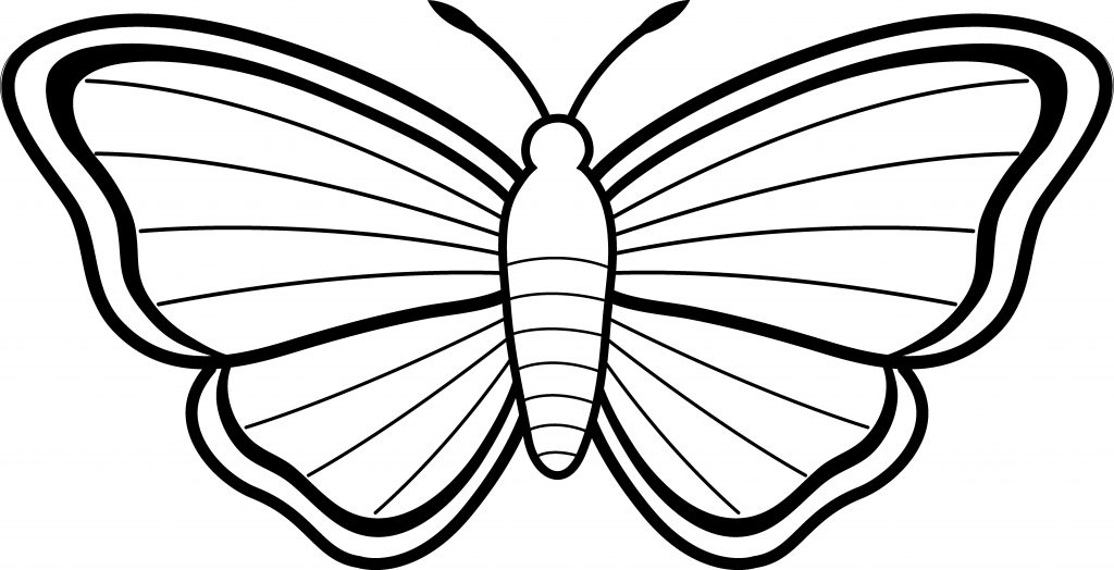 1024x524 How To Draw Butterflies New Collection Of Free Butterflies Drawing