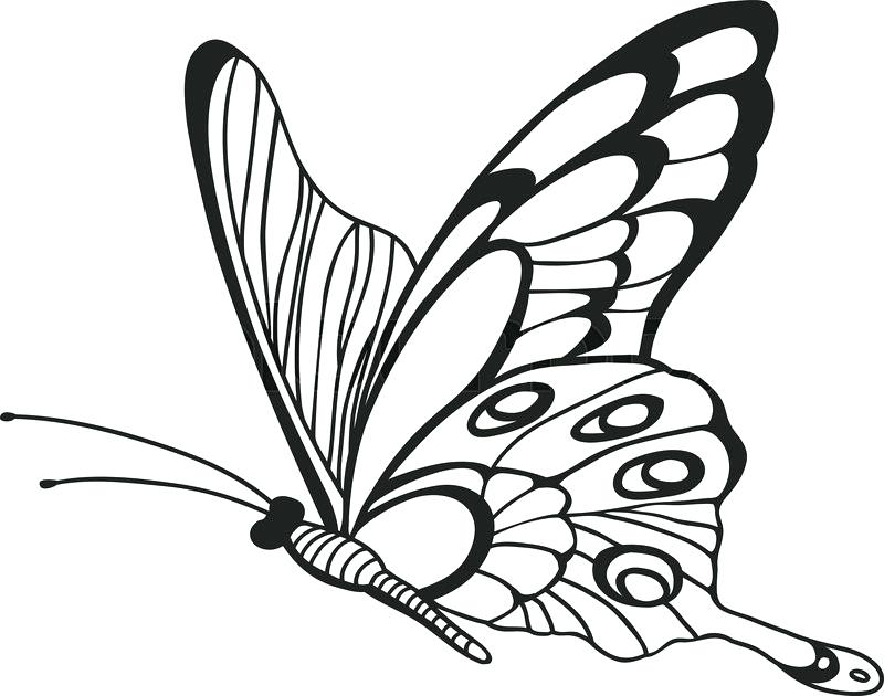 800x630 butterfly sketch butterfly the collection monarch butterfly easy