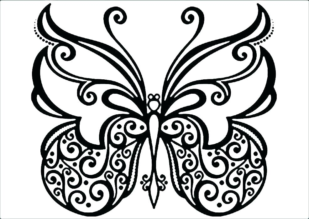 986x701 Butterfly Color