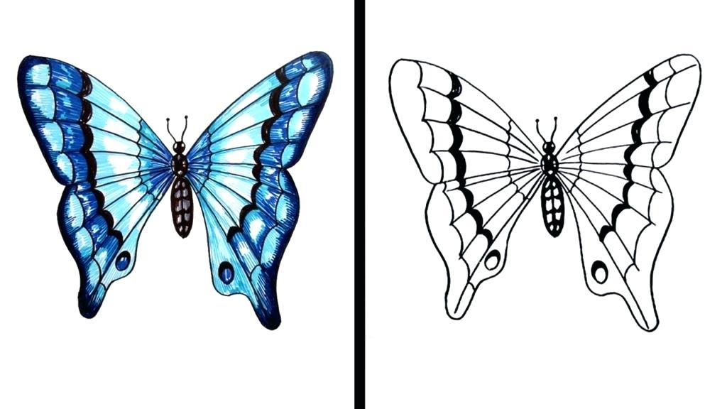 1024x576 Butterfly Drawing For Kids Step