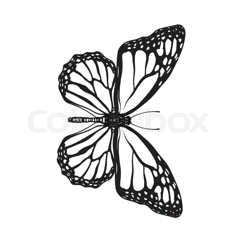 800x800 Butterfly Sketch Pictures