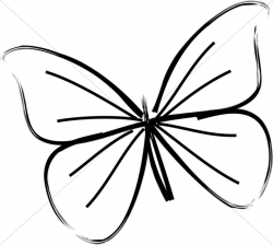 250x224 Butterfly Clip Art Line Drawing, Picture