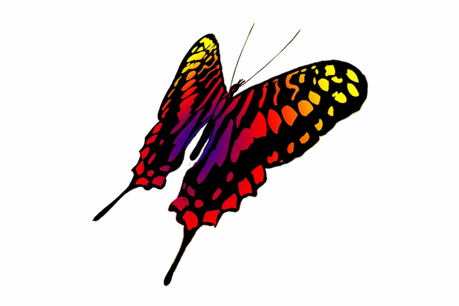 920x613 Drawing Of Swallowtail Butterfly