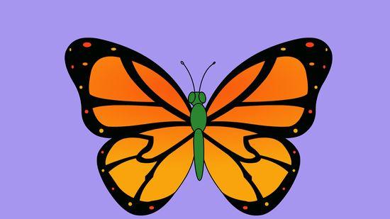 550x309 Ways To Draw A Butterfly Step