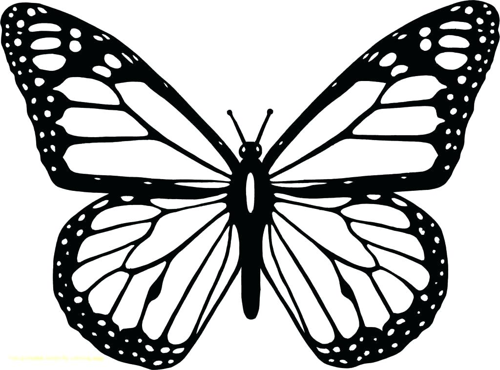 Butterfly Drawing Images Free Download On Clipartmag