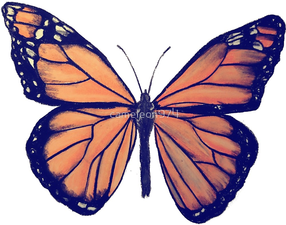 1000x785 Monarch Butterfly Drawing