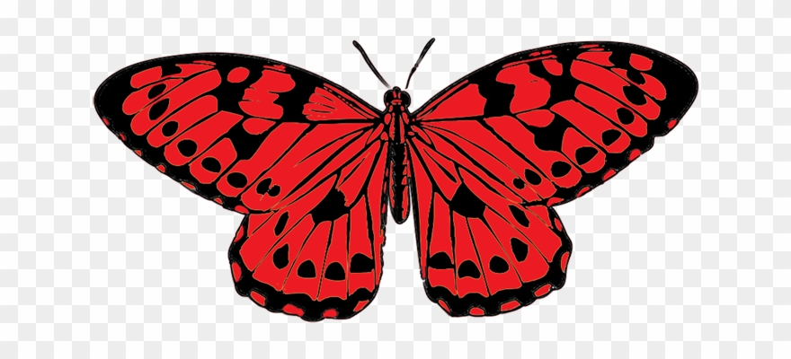 880x400 Picture Free Stock Clipart Colored Butterfly