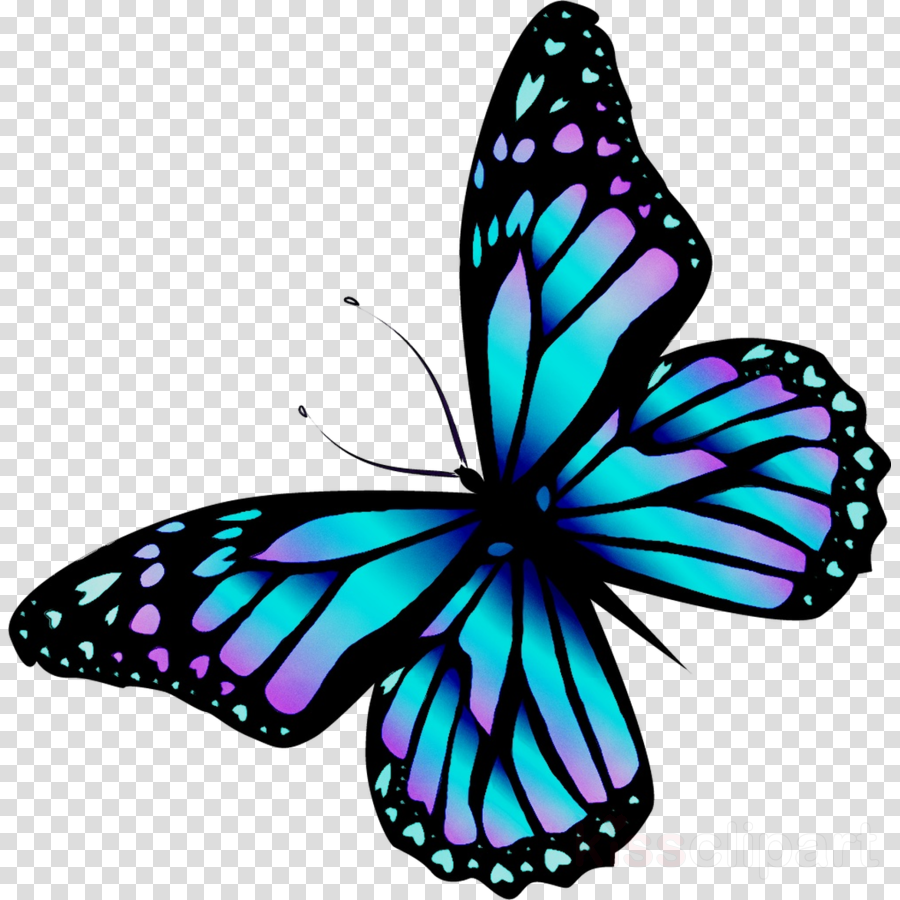900x900 Butterfly, Drawing, Queen, Transparent Png Image Clipart Free