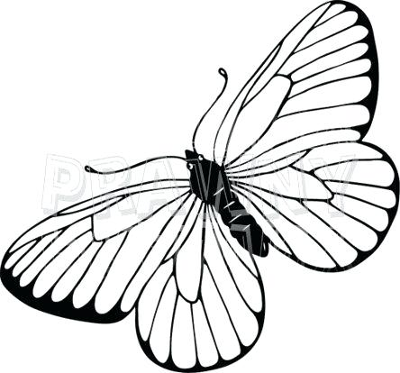 444x414 Drawing Of Butterfly How To Draw A Butterfly On A Flower Step