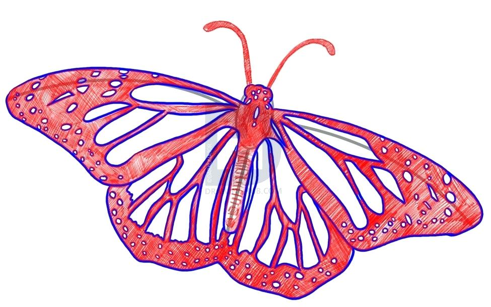 975x609 How To Draw Butterflies Step