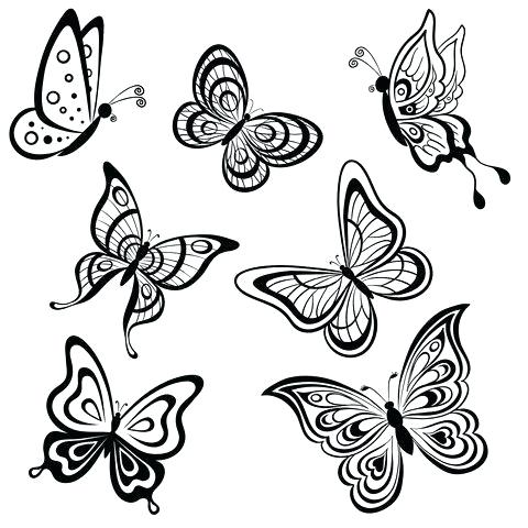 480x480 Drawing A Butterfly How To Draw A Butterfly Step Drawing Picture
