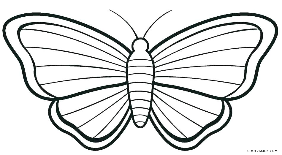 photograph about Free Printable Butterfly Template known as Butterfly Drawing Template Totally free obtain most straightforward Butterfly